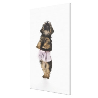 A Yorkie-poo puppy in a tutu on her hind legs. Gallery Wrap Canvas