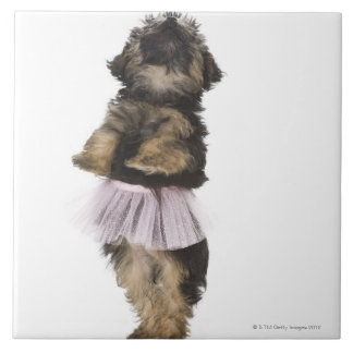 A Yorkie-poo puppy in a tutu on her hind legs. Tile