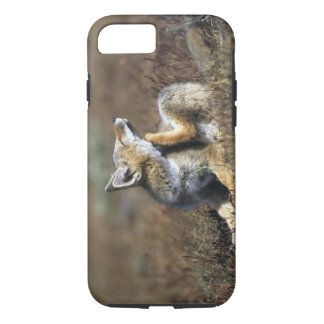 A young Argentine Gray Fox, (Dusicyon griseus), iPhone 8/7 Case