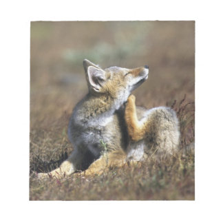 A young Argentine Gray Fox, (Dusicyon griseus), Notepad