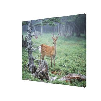 A young deer in a forest clearing canvas prints