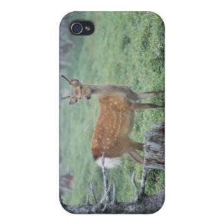 A young deer in a forest clearing case for iPhone 4