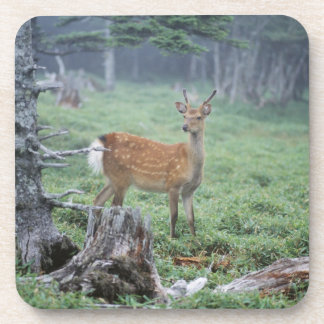 A young deer in a forest clearing coaster