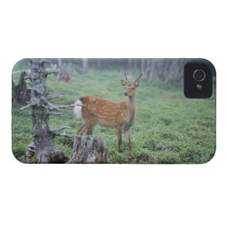 A young deer in a forest clearing iPhone 4 Case-Mate cases