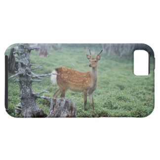 A young deer in a forest clearing iPhone 5 cases
