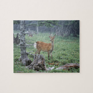 A young deer in a forest clearing puzzles