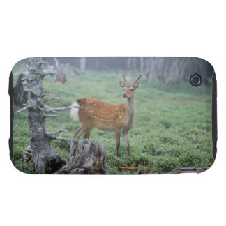 A young deer in a forest clearing tough iPhone 3 cover