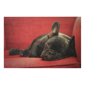 A Young French Bulldog Lying On A Couch Wood Wall Art