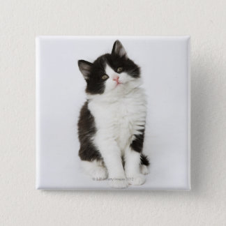 A young kitten sitting looking into the camera 15 cm square badge