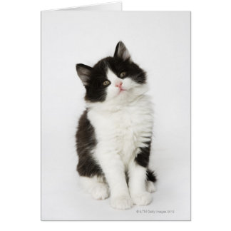 A young kitten sitting looking into the camera. card