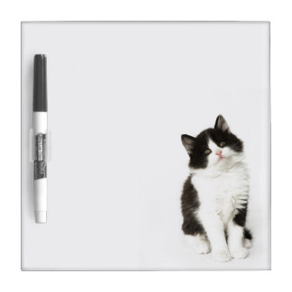 A young kitten sitting looking into the camera dry erase board