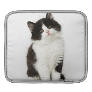 A young kitten sitting looking into the camera iPad sleeve