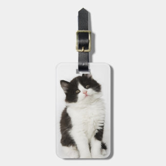 A young kitten sitting looking into the camera luggage tag