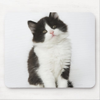 A young kitten sitting looking into the camera mouse mat