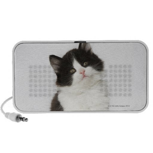 A young kitten sitting looking into the camera mp3 speaker