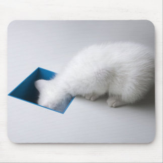 A Young Kitten Stretches His Head Down a Square Mouse Mat