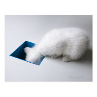 A Young Kitten Stretches His Head Down a Square Postcard