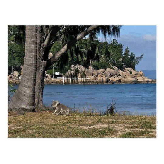 A young koala at the beach postcard