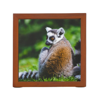 A Young Lemur, Animal Photography Desk Organiser
