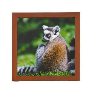 A Young Lemur, Animal Photography Desk Organisers