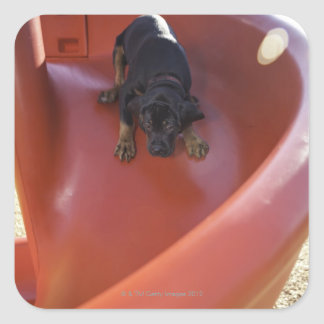 a young puppy sliding down a slide square sticker