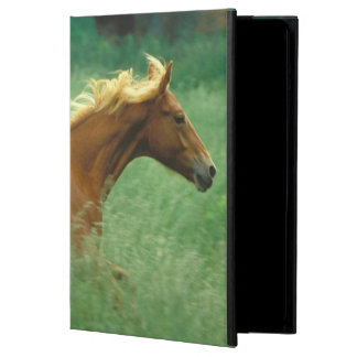 A young stallion runs through a meadow of tall case for iPad air