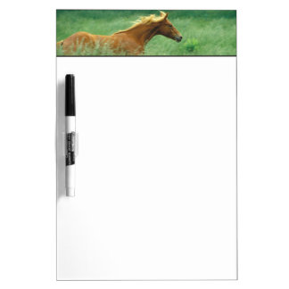 A young stallion runs through a meadow of tall dry erase board