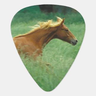 A young stallion runs through a meadow of tall guitar pick
