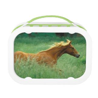 A young stallion runs through a meadow of tall lunch box