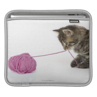 A young tabby kitten playing iPad sleeves