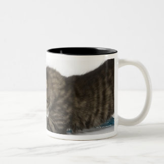 A young Tabby kitten playing with wool. Two-Tone Coffee Mug