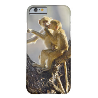 A young Yellow baboon  (Papio cynocephalus) Barely There iPhone 6 Case