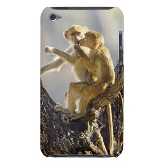 A young Yellow baboon  (Papio cynocephalus) Barely There iPod Cases