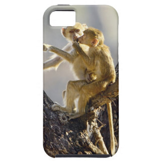 A young Yellow baboon  (Papio cynocephalus) Case For The iPhone 5