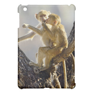 A young Yellow baboon (Papio cynocephalus) Cover For The iPad Mini