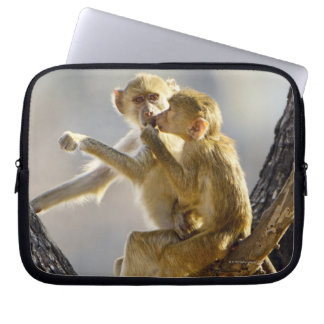 A young Yellow baboon  (Papio cynocephalus) Laptop Sleeve