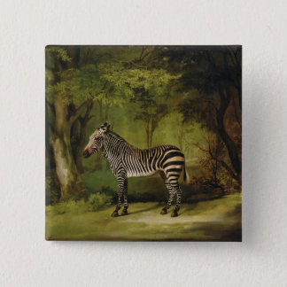 A Zebra, 1763 (oil on canvas) 15 Cm Square Badge
