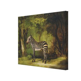 A Zebra, 1763 (oil on canvas) Canvas Print