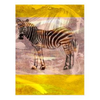 A Zebra Postcard