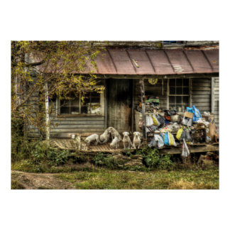 Abandoned Farm House with Dogs - Colour Poster