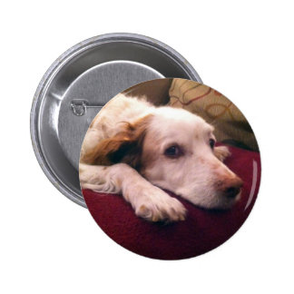 Abby Brittany Spaniel 6 Cm Round Badge