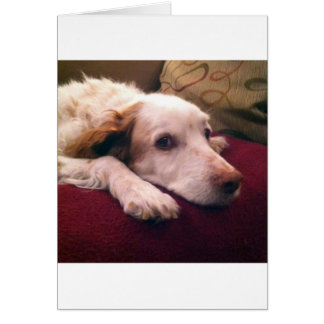 Abby Brittany Spaniel Greeting Card