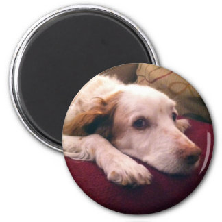 Abby Brittany Spaniel Magnet