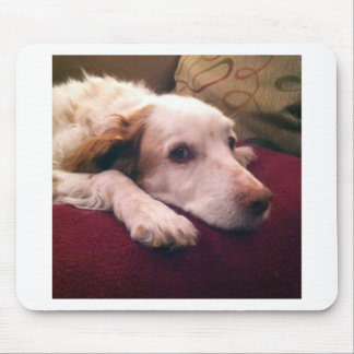 Abby Brittany Spaniel Mouse Pads