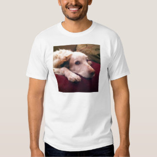 Abby Brittany Spaniel T-shirts