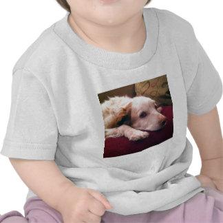 Abby Brittany Spaniel Tee Shirt