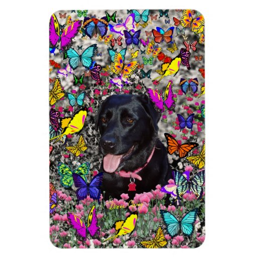 Abby in Butterflies - Black Lab Dog Magnets