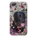 Abby in Flowers – Black Lab Dog