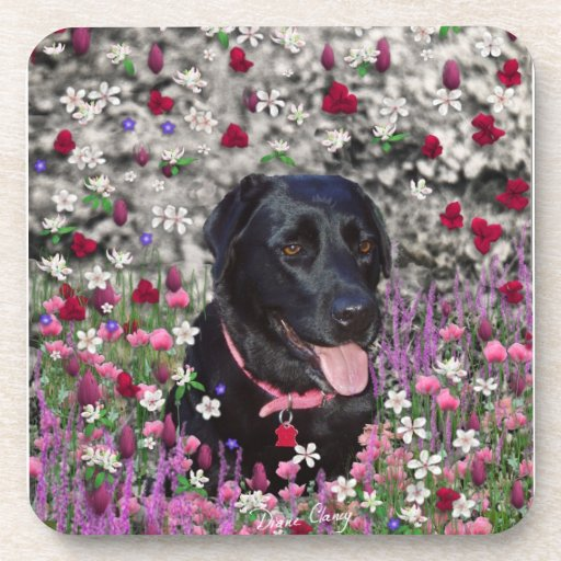 Abby in Flowers – Black Lab Dog Drink Coaster