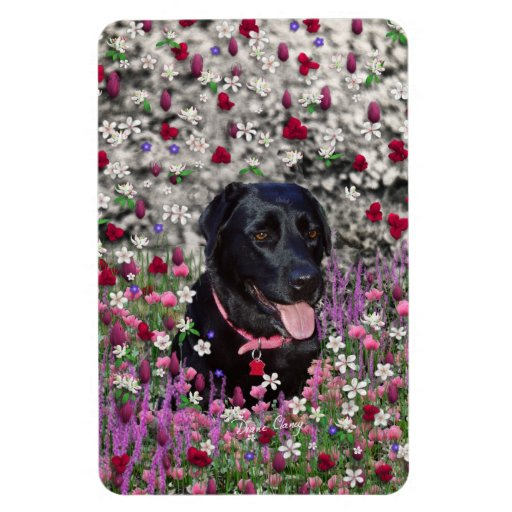 Abby in Flowers – Black Lab Dog Flexible Magnets